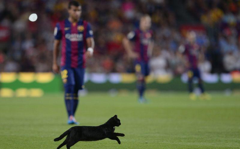 Milan!... 44 gatti tutti per te e nemmeno uno nero!