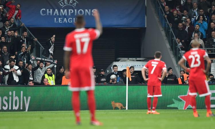 Uefa, multa al Besiktas per il gatto 'invasore di campo'