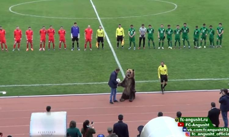 Incredibile in Russia: orso consegna pallone all'arbitro e incita i tifosi, gli animalisti insorgono VIDEO