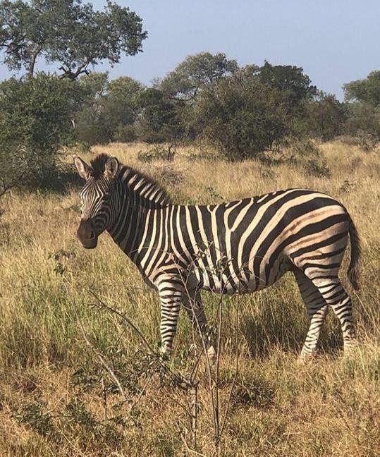 Per una zebra che torni a correre libera e vincente